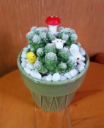 可爱仙人掌盆栽