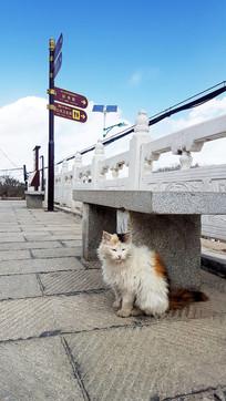石凳下的猫咪