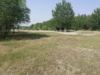 草地和树林