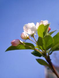粉色的花骨朵