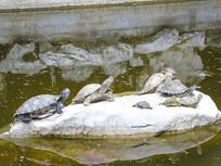 休憩的一群乌龟