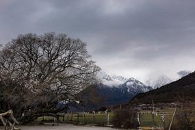雅鲁藏布江大峡谷雪山风光