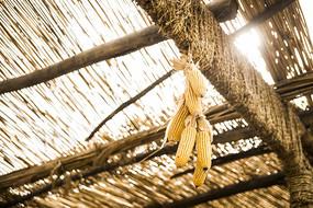 挂在房梁上的玉米