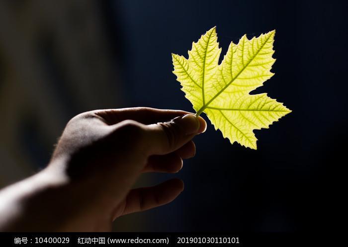 手中的一片叶子图片