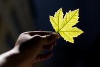 手中的一片叶子