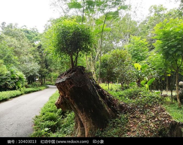 台风纪念树图片