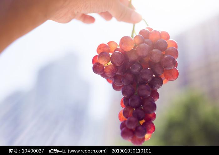 阳光下的一串葡萄图片