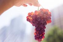 阳光下的一串葡萄