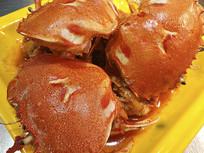 肥硕梭子蟹