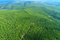 航拍大兴安岭原始森林公路景观