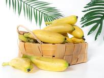 绿叶背景里的黄色芭蕉水果图