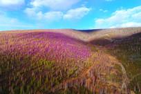 杜鹃花染红了春季山林