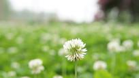 春天公园花朵