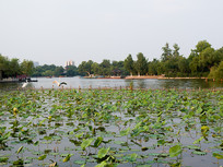 济南大明湖旖旎风光
