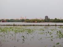 济南大明湖远景