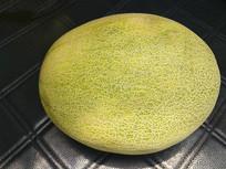 拍摄哈密瓜