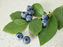 鲜果蓝莓拍摄