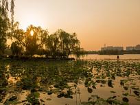 夕阳下的济南大明湖美丽风光