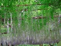 藤蔓植物与支架