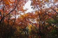 红色树林景色