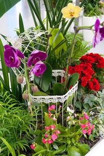 盆栽花卉园艺艺术