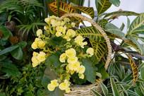 室内盆栽花卉园艺艺术