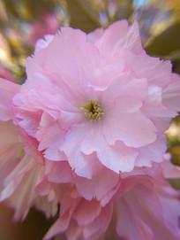 盛开的花朵微距特写