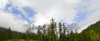 毕棚沟雪山下的高原森林植被