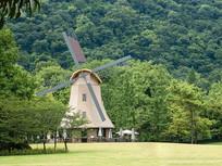 绿荫环绕的大风车
