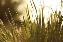 阳光下的植物背景