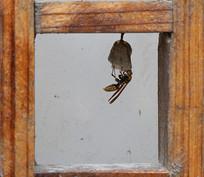 一只小蜜蜂正在筑巢