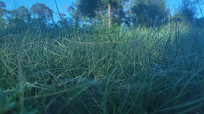 夜晚的草丛