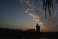日出时彩云垂柳下的城市