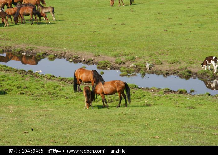 草原上的马儿图片