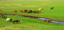 河边草原马群