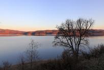 初冬山湖树