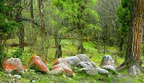 高原原始森林及红石景观