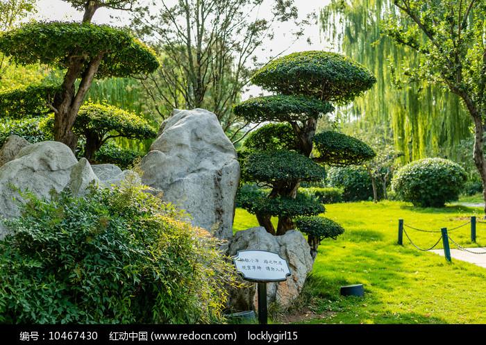 济南大明湖公园景观树图片