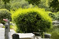济南泉城公园绿化