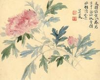 清代恽寿平瓯香馆写生图册牡丹
