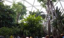 北京世园会植物馆珍稀植物