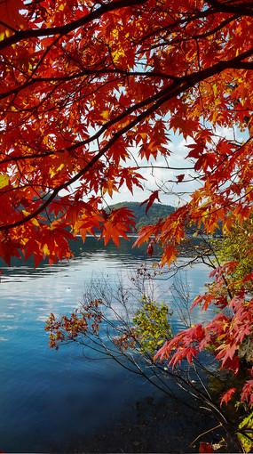 红叶谷湖泊