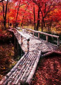 红叶谷木桥