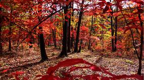 红叶谷树木