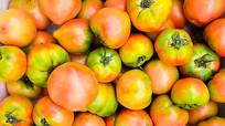 吉林大地柿子