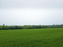绿野森林田园