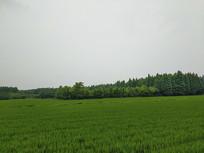 绿野森林田园远景