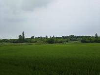 绿野田园美景
