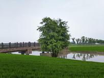 绿野小桥古松