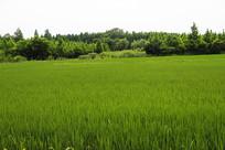 米市渡粮田